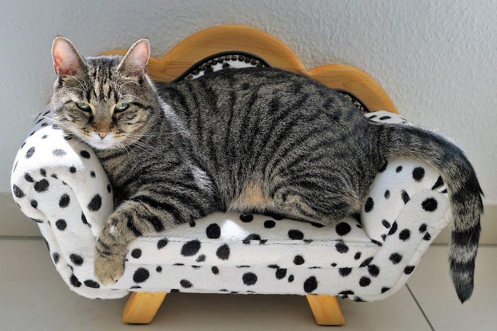 Mooie meubels kopen via webshop